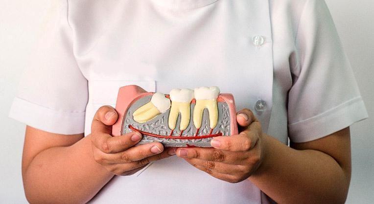 зуб растет в десну