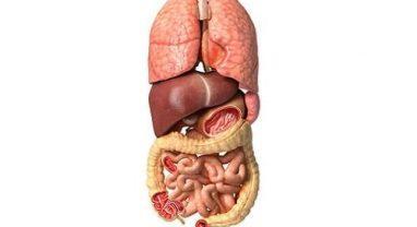 Заболевание внутренних органов